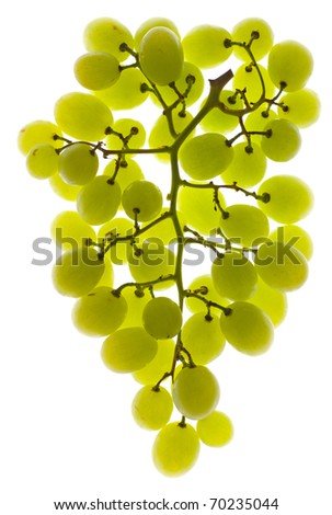 A bunch of white grapes lit from behind - stock photo