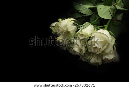 A bunch of  white roses best for wedding use over black background