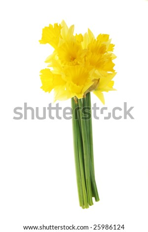 A bunch of yellow daffodils isolated on white