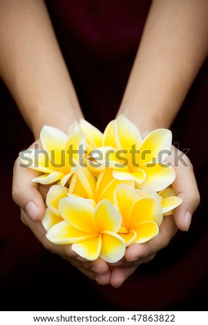 a bunch of yellow tropical flowers on woman hands - stock photo