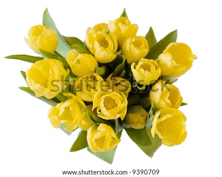 A bunch of yellow tulips on white