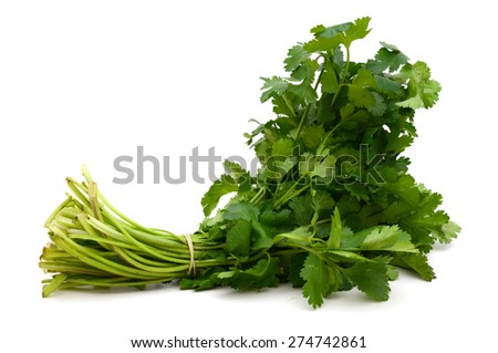 a bundle of cilantro on white background  - stock photo