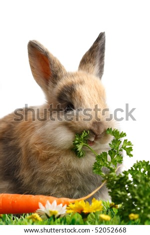 A bunny with easter eggs isolated on white background
