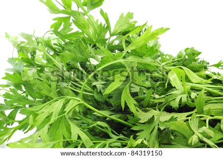 a bunsh of parsley on a white background
