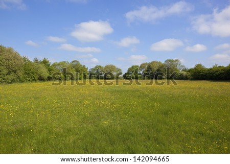 a buttercup pasture in yorkshire england with trees and hedgerows under a blue cloudy sky in early summer