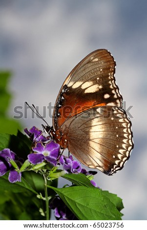 A butterfly feeding on flowers against a sky with clouds - stock photo