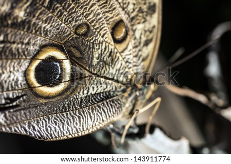 A butterfly is a mainly day-flying insect of the order Lepidoptera