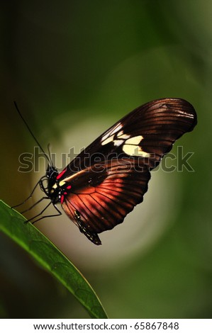 a butterfly laying on a leaf in front of a nice bokeh - stock photo