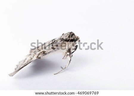 A butterfly of silkworm on white