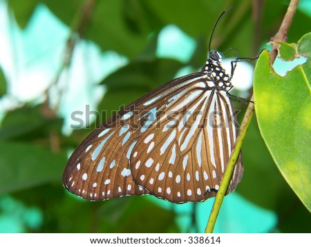A butterfly stay still on twig - stock photo