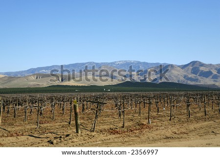 A California vineyard in foreground, orchards behind and mountains in background