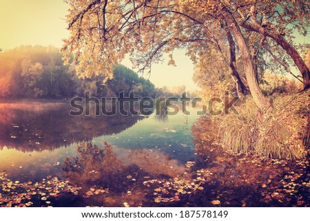 A calm river with autumn leaves in the water, vintage landscape - stock photo