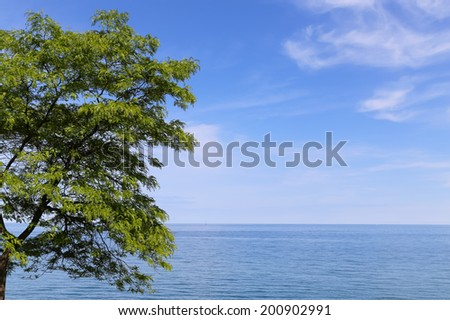 A calm sea and tree with copy space