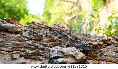 Lizard Camouflage Stock Images, Royalty-Free Images & Vectors ...