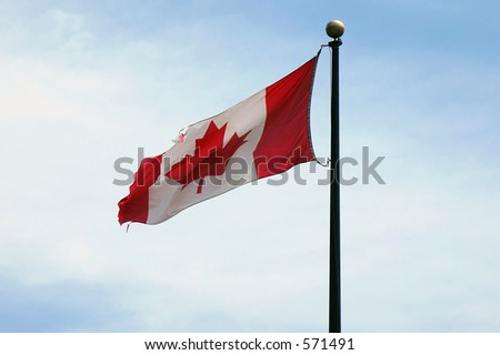 A Canadian Flag slightly torn due to the high constant winds at it's location - stock photo