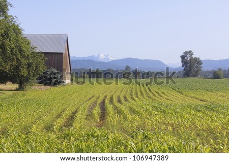 A Canadian homestead on the West Coast/A Canadian homestead/Rural agricultural land on a typical Canadian farm. - stock photo