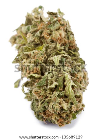 A Cannabis bud that had been grown by hydroponic process, isolated on white background. - stock photo