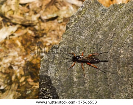 a capsid bug on a tree stump in a wood