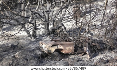 A car is completely burned after fire in the forest, still smoking