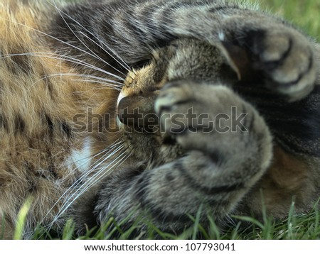 A caring cat - stock photo