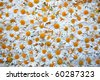 A carpet made of plenty of flowers of camomiles - stock photo