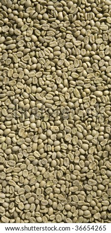 A carpet of green coffee beans - stock photo