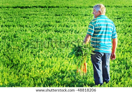 a Carrot farmer in a blue shirt with freshly picked carrots in his hand - stock photo