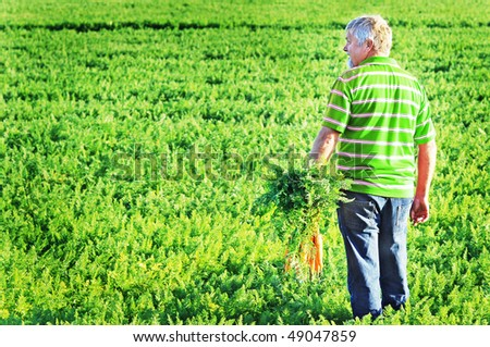 a Carrot farmer with a bunch of freshly picked carrots - stock photo