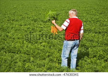 a Carrot farmer with a bunch of freshly picked carrots in his hand - stock photo