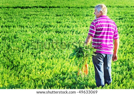 a Carrot farmer with a pink shirt with freshly picked bunch of carrots - stock photo