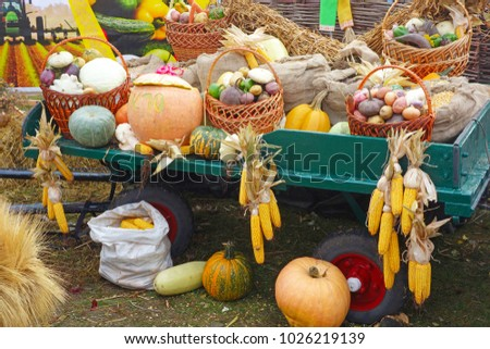 A cart with a big autumn harvest of vegetables