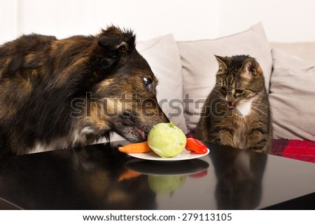 A cat and a dog sitting at a table testing vegetables - stock photo