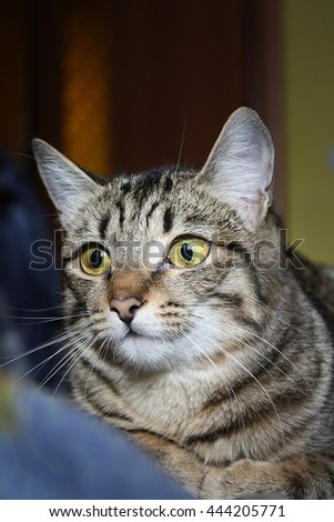a cat animal kitten lovely in the home - stock photo