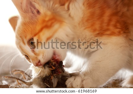 A cat eating a bird it has caught - motion blur on cat's head - stock photo