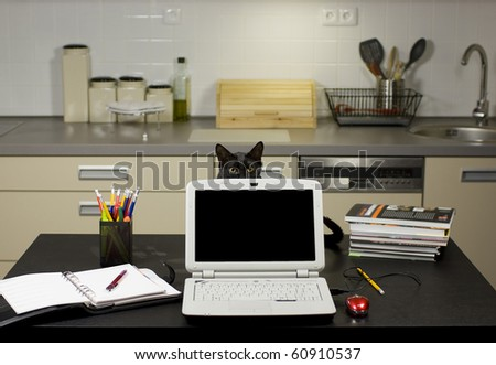 A cat in a home office - peeping behind a laptop screen on a desk with stationery equipment and books, kitchen in the background. - stock photo