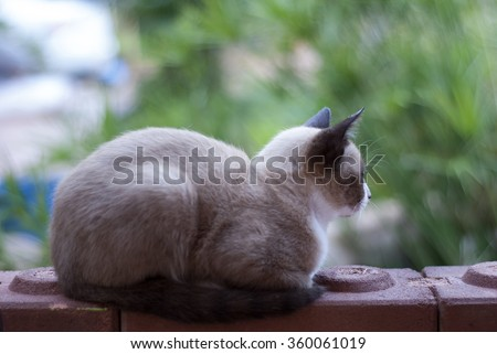 a cat in morning - stock photo