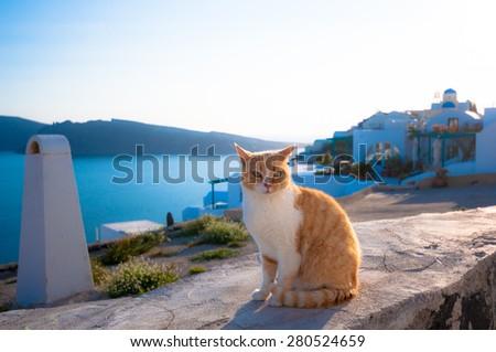 A cat in Santorini - stock photo