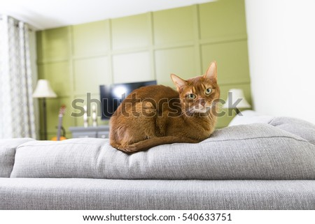 A Cat in the living room on the couch