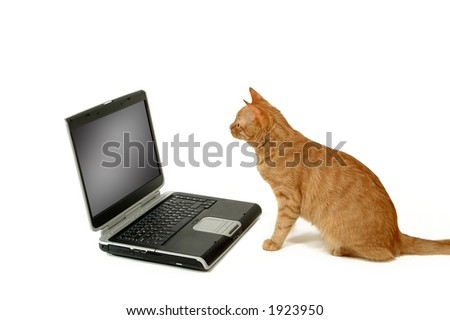 A cat is lokking at a laptop - stock photo