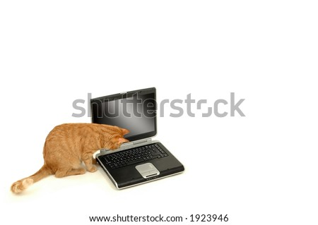 A cat is lokking at the keyboard - stock photo