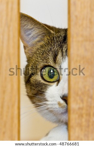 A Cat is looking from behind a wood with one eye - stock photo