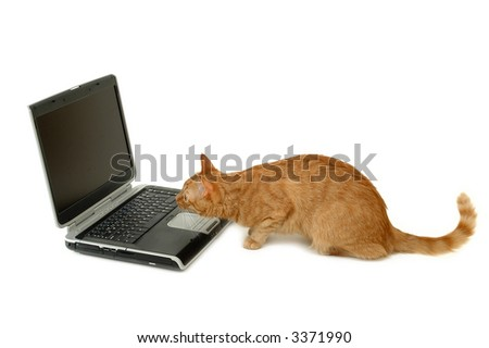 A cat is looking very interested on a laptop screen - stock photo