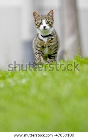 A Cat is running towards the Camera - stock photo