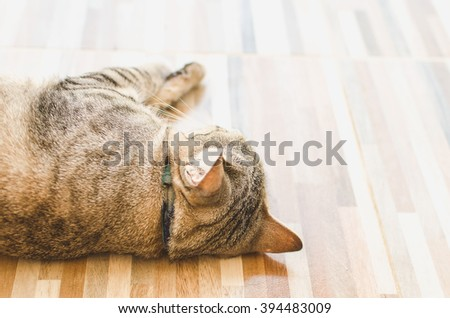 A cat is sleeping on the floor and was looking from the back. - stock photo