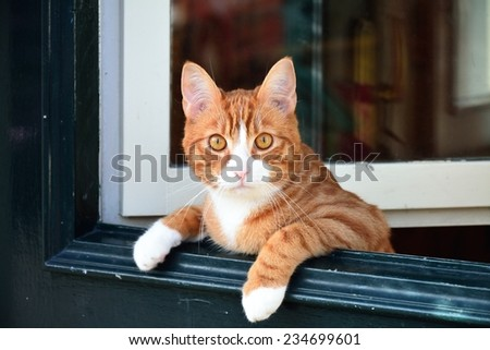 A cat leaning over the green door. - stock photo