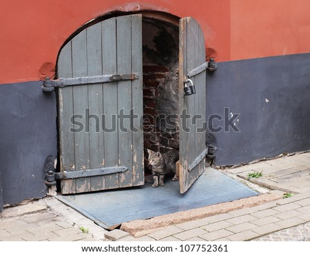 A cat looking out from the old wooden door - stock photo