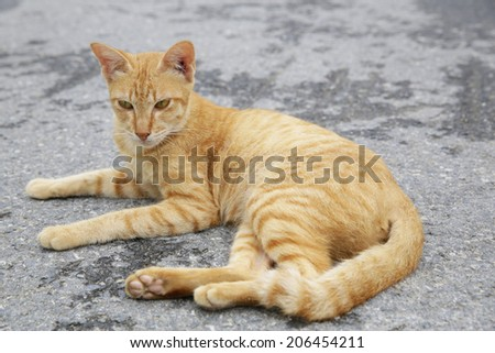 A  cat lying down on street - stock photo