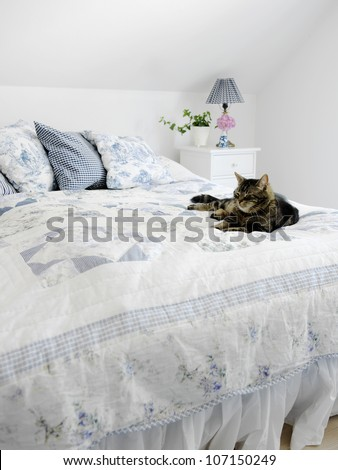 A cat lying on a bed, Sweden. - stock photo