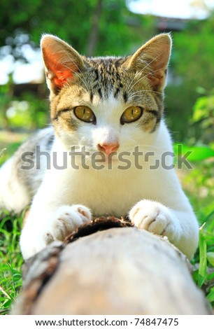 a cat lying on log wood in the garden - stock photo