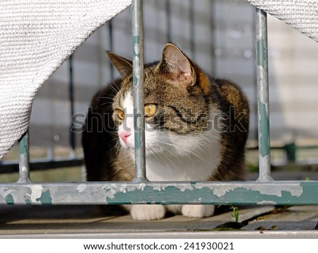 A cat observing her territory from a balcony.  - stock photo
